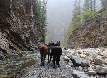 Horses on a river bottom