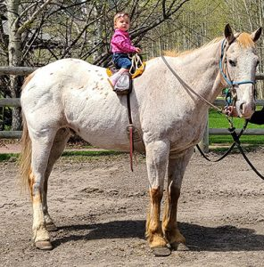 Boundary Ranch, Kananaskis, Alberta - Pony Rides - small child riding a pony