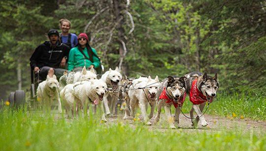 Boundary Ranch - Kananaskis, Alberta - Adventure Dog Cart Tours