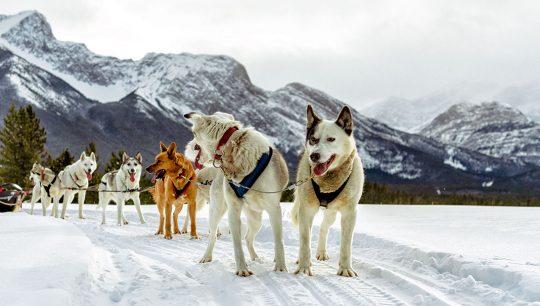 Boundary-Ranch---Kananaskis,-Alberta---Dog-Sledding